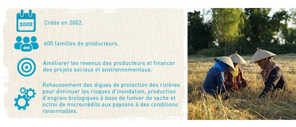 producteurs de riz