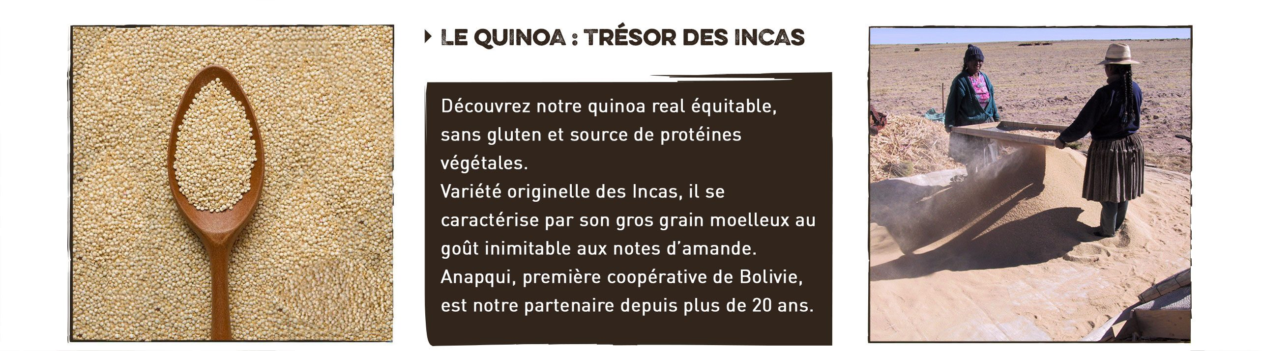 quinoa : trésor des incas