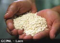 Producteurs de riz commerce équitable au Laos