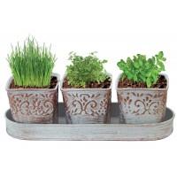Lot de 3 pots plantes arômatiques